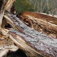 """Invito a primo incontro """"Dopo le devastazioni, il futuro dei nostri boschi """" Pieve di C. 07-12-018"""