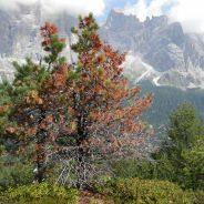 """Comunicato dopo secondo incontro """"Tempesta vaia: i boschi fragili raccontano il cambiamento climatico"""" Pieve di Cadore 18.01.019"""